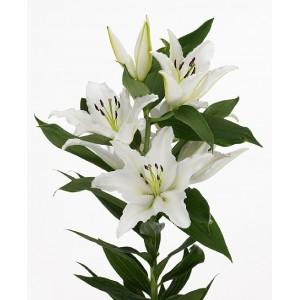 Лилия белая поштучно код 1061