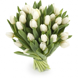 Тюльпан белый 25шт