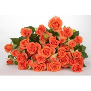 Роза кустовая №1 50см и 60см